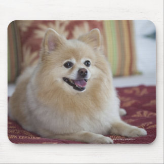 Pomeranian dog in pet friendly hotel room mouse mat