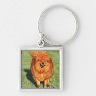 Pomeranian dog keychain, gift idea Silver-Colored square key ring