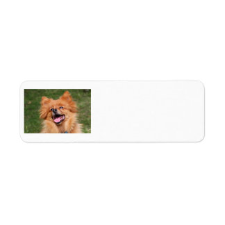 Pomeranian dog labels