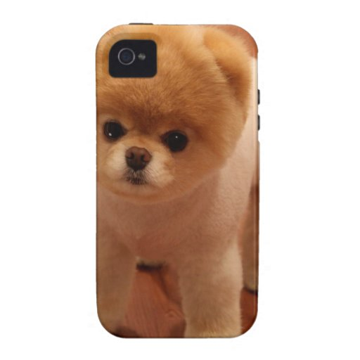 Pomeranian Dog Pet Puppy Small Adorable baby iPhone 4 Cases