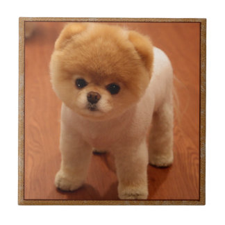 Pomeranian Dog Pet Puppy Small Adorable baby Small Square Tile