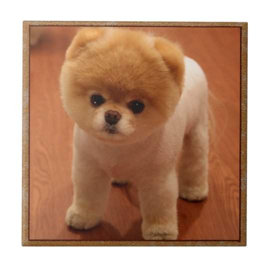 Pomeranian Dog Pet Puppy Small Adorable Baby Tile Zazzle Co Uk