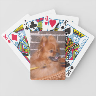 Pomeranian Dog Playing Cards