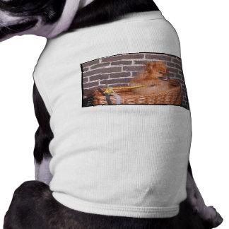 Pomeranian Pet Clothes