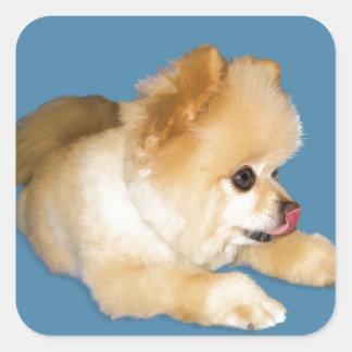 Pomeranian Dog Sticking Tongue Out Square Sticker