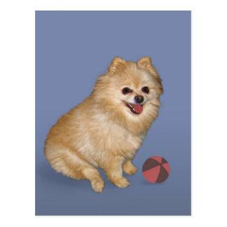 Pomeranian Dog with Ball Postcard