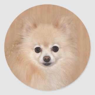 Pomeranian face classic round sticker