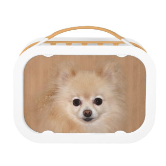 Pomeranian face lunch boxes