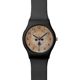 Pomeranian face watch