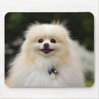 Pomeranian Headshot 1 Mouse Pad