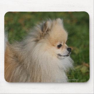 Pomeranian Headshot 2 Mouse Mat