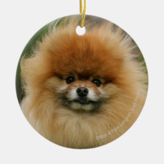 Pomeranian Headshot Looking at Camera Round Ceramic Decoration