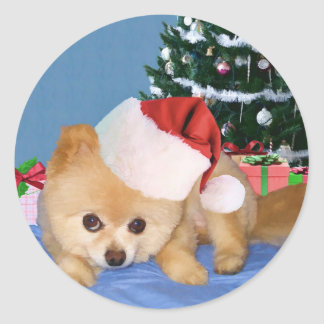Pomeranian in Santa Hat Sticker