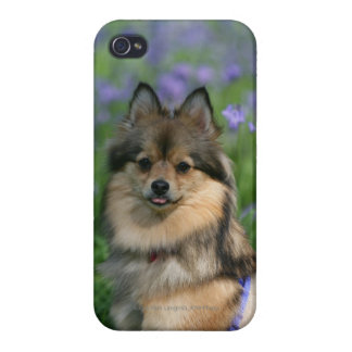 Pomeranian in the Grass iPhone 4/4S Cases