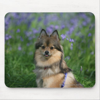 Pomeranian in the Grass Mouse Mat