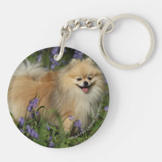 Pomeranian Looking at Camera in the Bluebells Double-Sided Round Acrylic Key Ring
