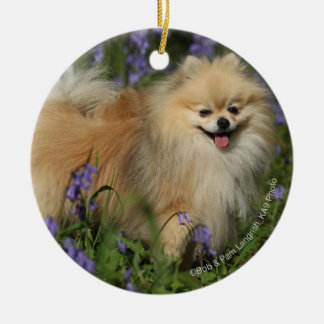 Pomeranian Looking at Camera in the Bluebells Round Ceramic Decoration