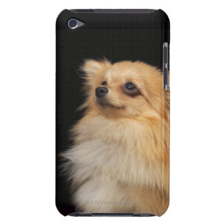 Pomeranian looking up on black iPod touch cases