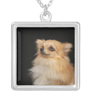 Pomeranian looking up on black silver plated necklace