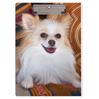 Pomeranian Lying On Blankets Clipboard