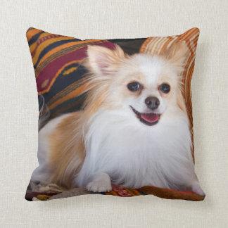 Pomeranian Lying On Blankets Cushion