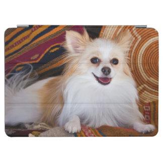 Pomeranian Lying On Blankets iPad Air Cover