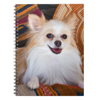Pomeranian Lying On Blankets Notebook