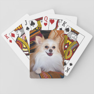 Pomeranian Lying On Blankets Playing Cards