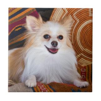 Pomeranian Lying On Blankets Tile