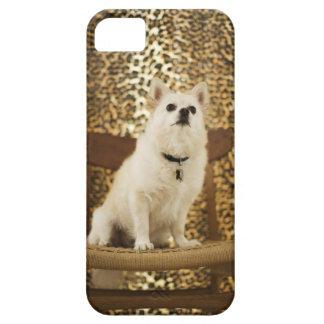 Pomeranian mix iPhone 5 covers