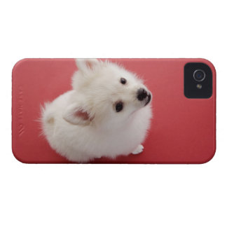 Pomeranian on the Red Carpet Case-Mate iPhone 4 Case