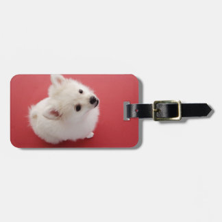 Pomeranian on the Red Carpet Luggage Tag