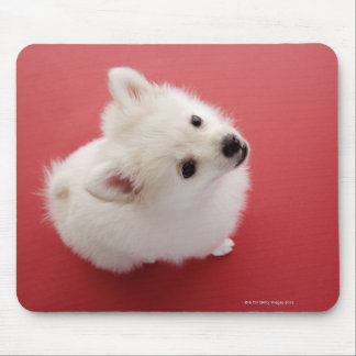 Pomeranian on the Red Carpet Mouse Mat