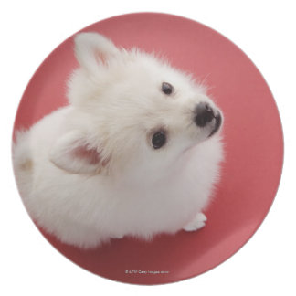 Pomeranian on the Red Carpet Plate