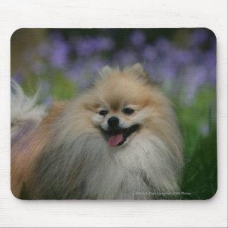 Pomeranian Panting Mouse Pad