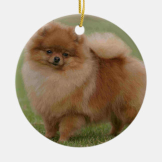 Pomeranian Perfection, Christmas Ornament