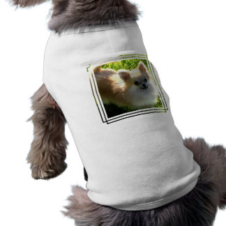 Pomeranian Puppies Pet Shirt