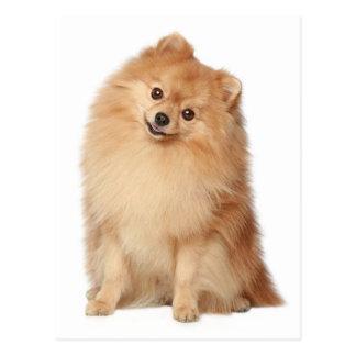 Pomeranian Puppy Dog Blank Post Card