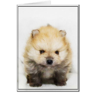 Pomeranian puppy greeting card