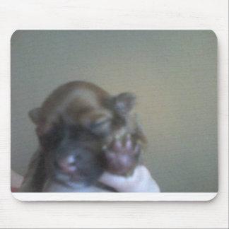 pomeranian puppy paws mouse mat