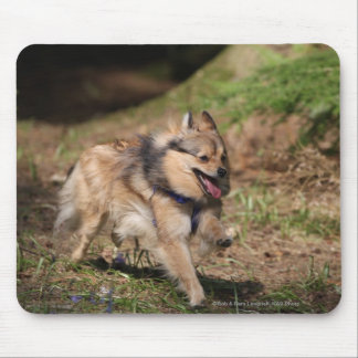 Pomeranian Running with Harness on Mouse Mat