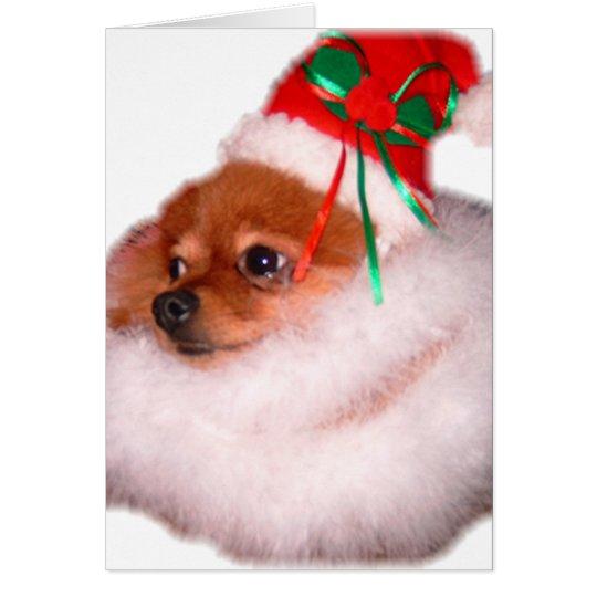 Pomeranian Santa Christmas Card