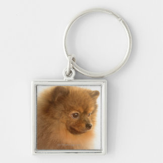 Pomeranian Silver-Colored Square Key Ring