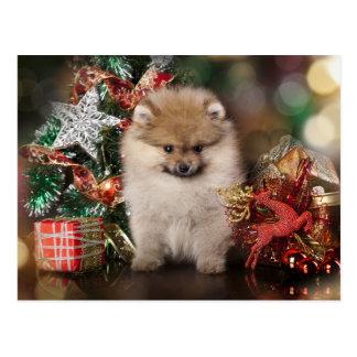 Pomeranian Spitz, Christmas Puppy Postcard