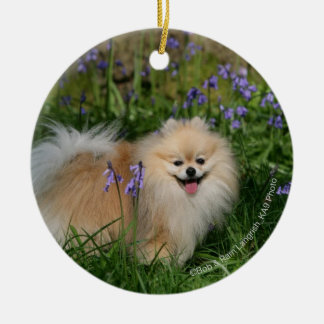 Pomeranian Standing Looking at Camera Round Ceramic Decoration