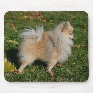 Pomeranian Standing Mouse Mat