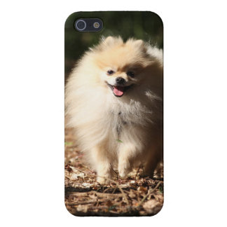 Pomeranian Trotting in the Fallen Leaves iPhone 5 Case