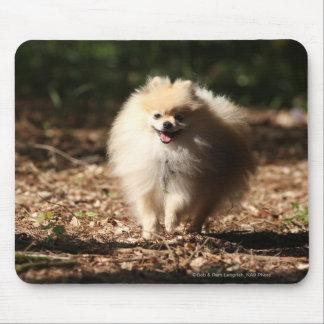 Pomeranian Trotting in the Fallen Leaves Mouse Mat