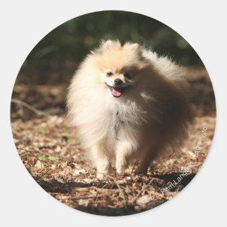 Pomeranian Trotting in the Fallen Leaves Round Sticker