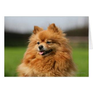 Pomeranian Watching Card